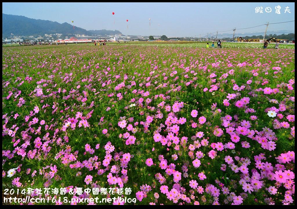 2014新社花海節&臺中國際花毯節DSC_4884