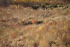 prairie, steppe, leaf, grass, shrubland, flora, forest, natural environment, wilderness, vegetation, savanna, grassland, wildlife,