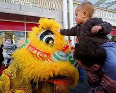 Toddler touching the dancing lion