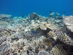 reef #2016