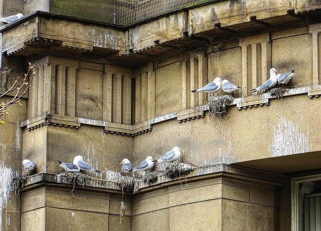 Down Town Bird Sanctuary, Canon POWERSHOT SX240 HS