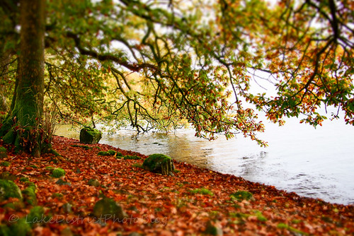 湖水地方 イギリス 秋 ウィンダミア湖