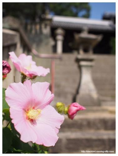 Onomichi view #40