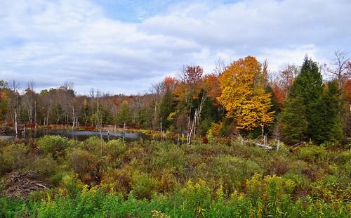 autumn fall nature leaves dam beaver