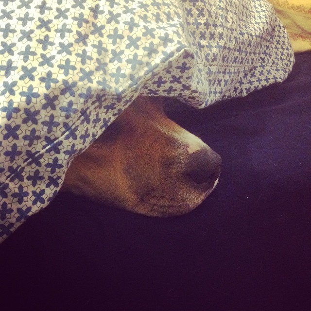 Some puppy's cold #dogs #dogsofinstagram