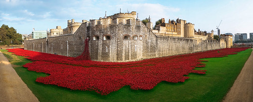 Tower_of_London_Poppy