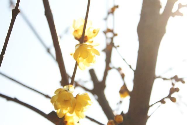 2014-02-01_00207_宝登山