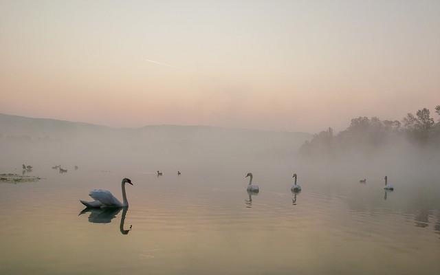 lake Zajarki (003) - foggy morning