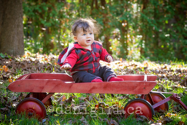 Photograph of a baby boy on a wagon in the leaves