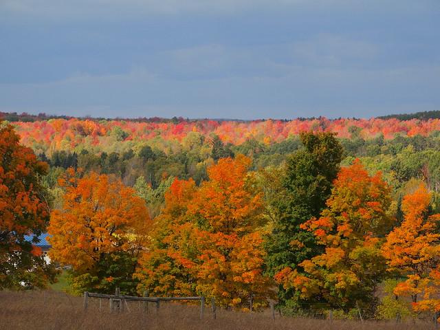 Fall colors in Michigan