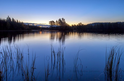blue autumn nature water grass norway forest sunrise woodland norge natur bluesky nopeople bluehour drammensmarka autumnphotography