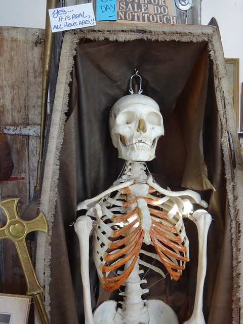 Fivehands skeleton