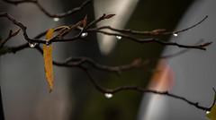 treedrop