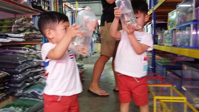 Both brothers checking out the fishes.