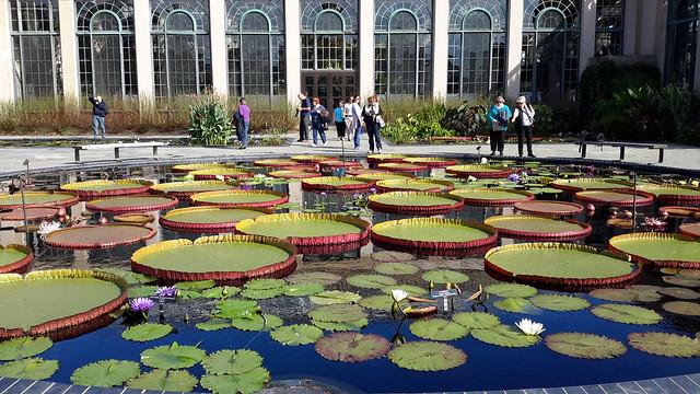 STUNNING water gardens at Longwood Gardens