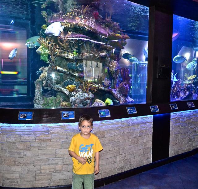 nais aquarium guatemala