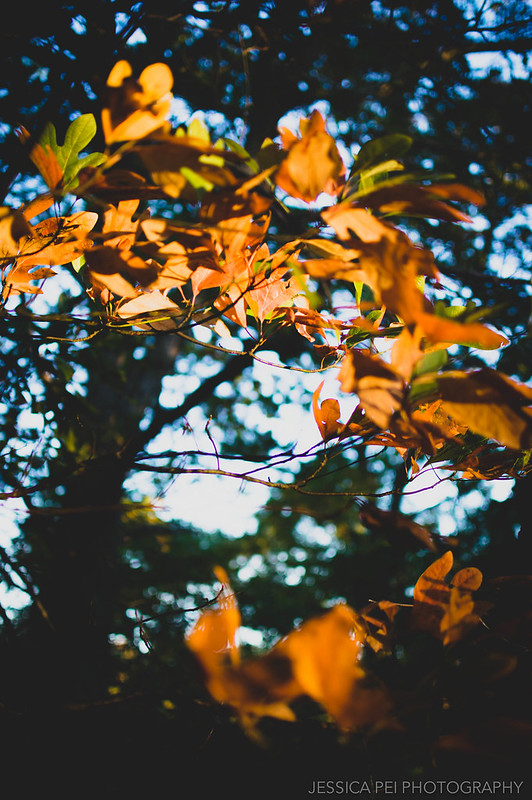 leaves fall autumn nature yellow orange