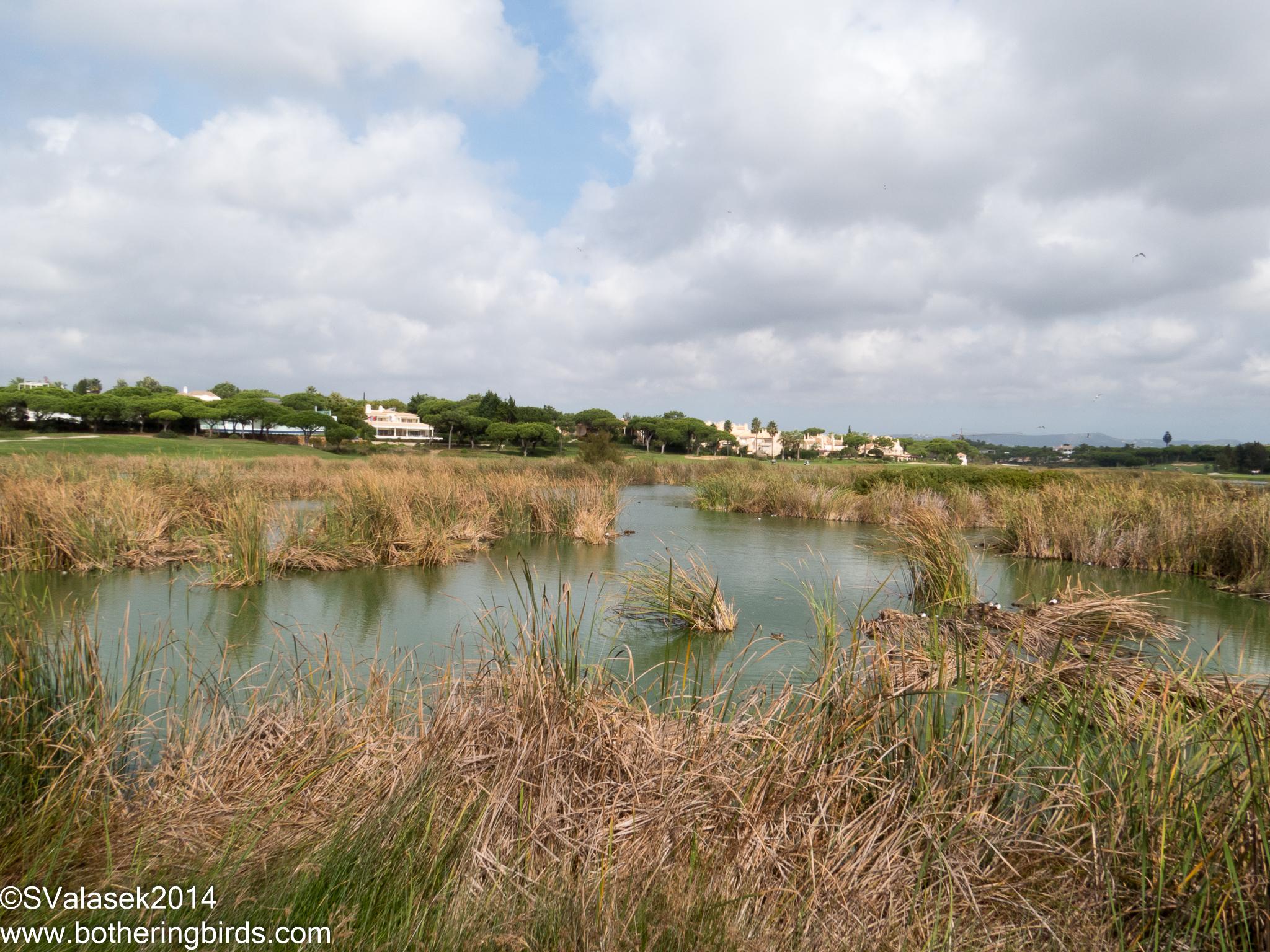Wetlands at San Lorenzo Golf Course