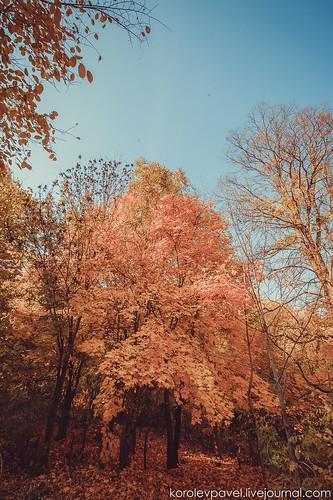 Autumn-258
