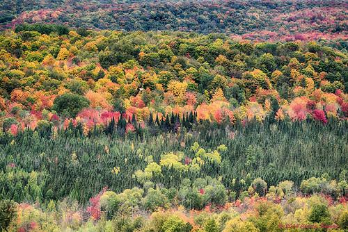 fallcolor baldeagle jordanrivervalley pigeonriverstateforest michiganfallcolors charlesbonhamphotography deadmansshill