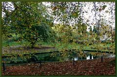 Autumn Leaves---2
