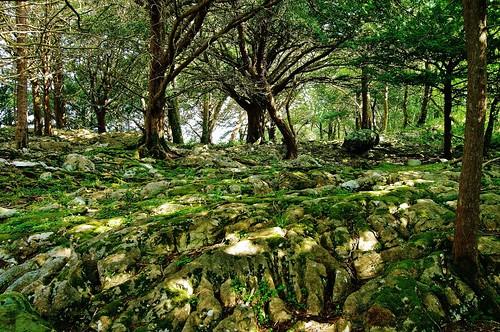 moss unesco boulders killarneynationalpark countykerry muckrossestate ireland2013 firstestablishedpark specialareaconservation