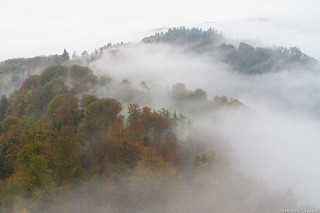 Morning Fog in Uetliberg
