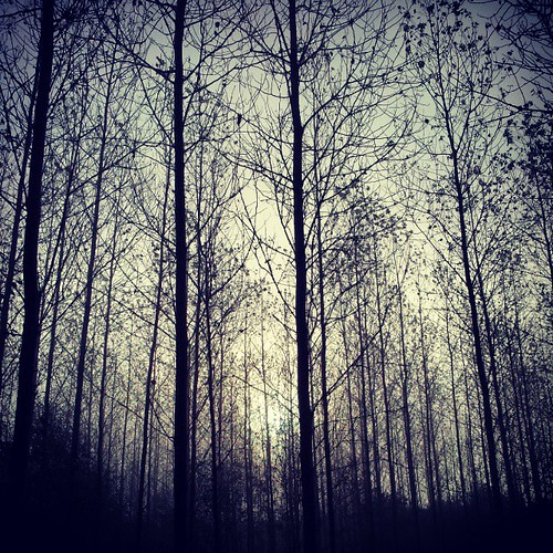 #autumn #fog