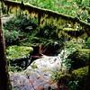 mossy #opalcreek #oregon