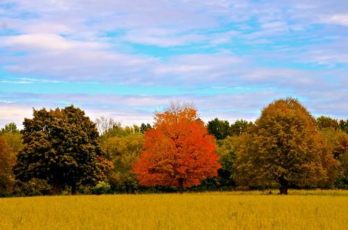 park autumn trees orange tree fall grass clouds forest illinois nikon october bluesky il prairie kanecounty saintcharles 2014 chicagoist kanecountyforestpreserve leroyoaks nikon2485 nikond7000 leroyoakscountyforestpreserve