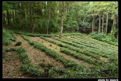 沿著步道可看到幾處小菜園。圖片來源:munch