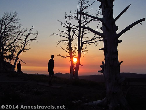Some of my companions enjoy the sunrise at Cloud Cap Campground, Mt. Hood National Forest, Oregon