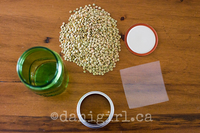 Sprouting lentils (1 of 4)