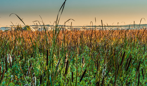Marsh Land by Geoff Livingston