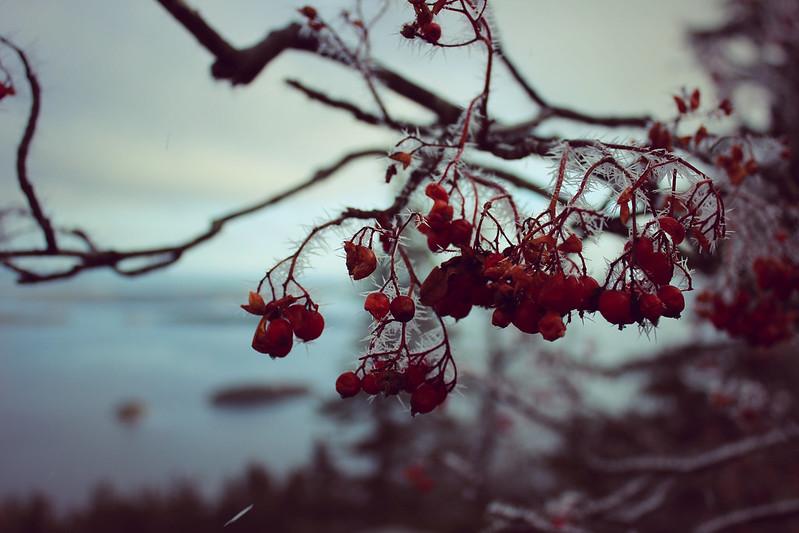 IMG_9203_Fotor