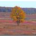 Shenandoah National Park -Virginia