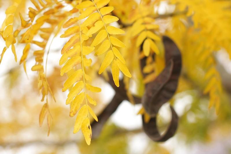 leaf hunting