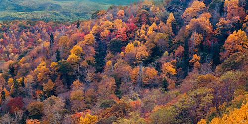 film landscapes fallcolors fineart northcarolina 4x5 largeformat blueridgeparkway 2014 ektar ebonysv45ti jaspcphotography