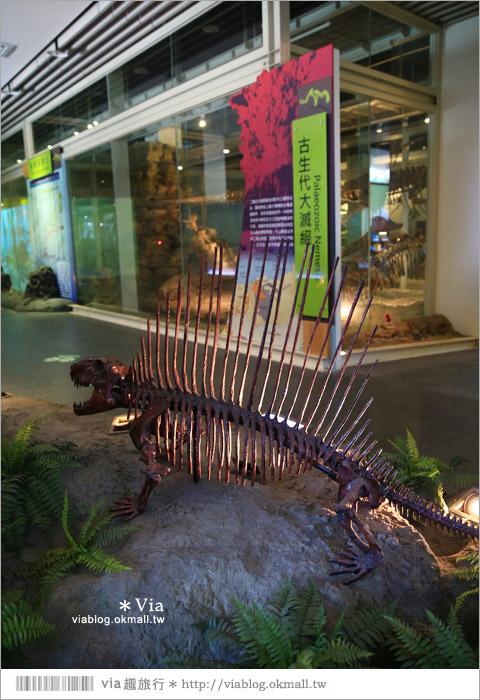 【台南南科景點】樹谷生活科學館~超大的劍齒象化石!有趣又能長知識的博物館!9