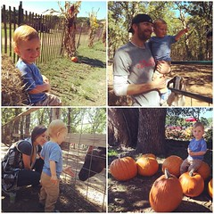 the pumpkin patch is an obligatory (and fun!) fall family outing, but it sure felt like summer today. #sunnypatch #happytoddler #pumpkinswerepicked
