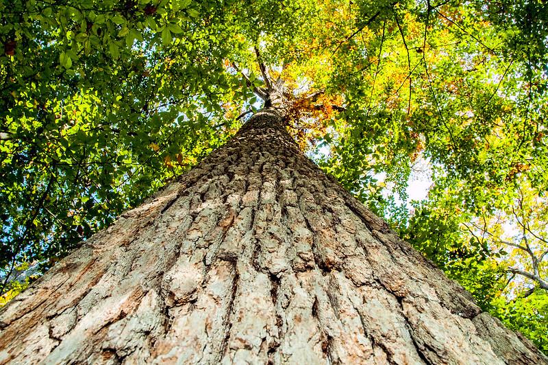 Wells Woods Nature Preserve - October 24, 2014