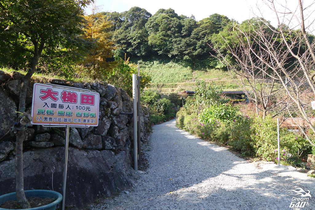 竹子湖青楓步道05
