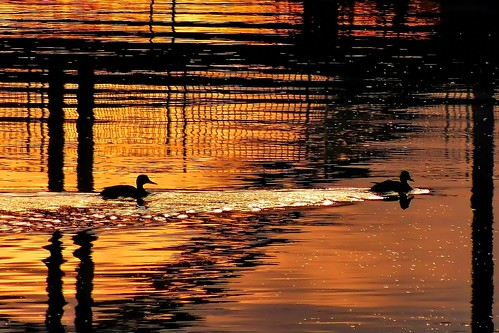 autumn sunset canada water silhouette reflections lumix winnipeg ducks manitoba redriver cans2s fz200