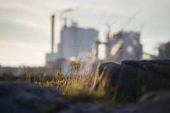 Blurred industry