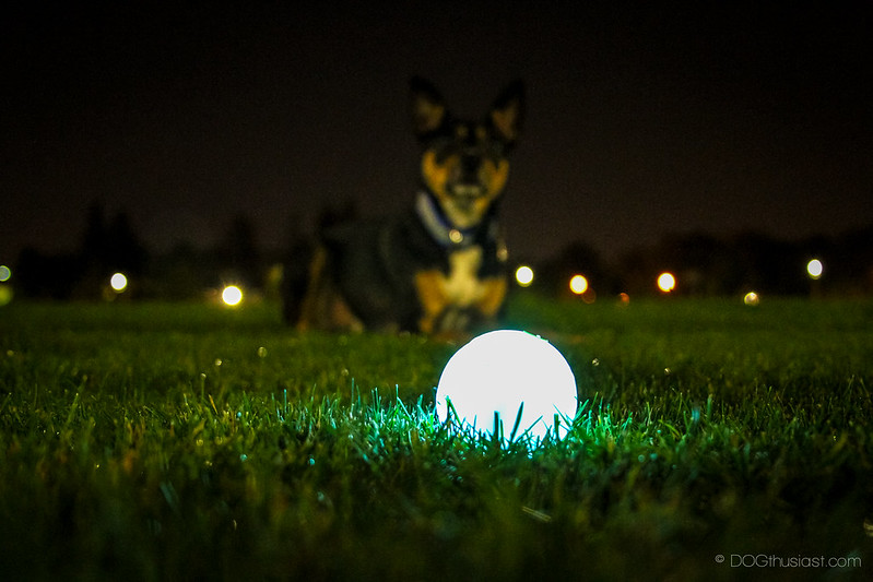 Glow Ball from Chuck It glowing in the grass.