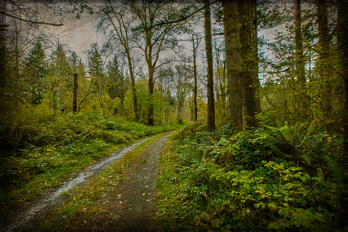 road trees texture frenchkiss rattlesnakestatepark