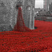 Tower Poppies 2014