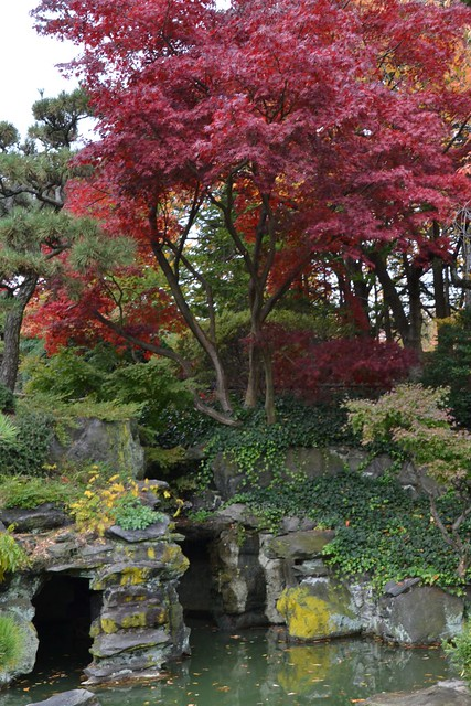 Fall color in BBG's Japanese Hill-and-Pond Garden. Photo by Elizabeth Peters.