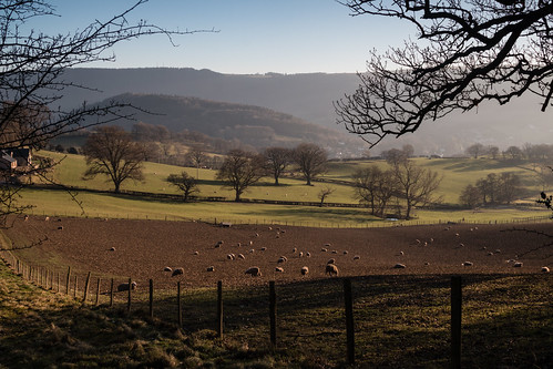 trees sheep field deevalley llangollen fence canon70d 24
