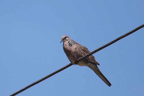 srilanka wildlife animlas birds